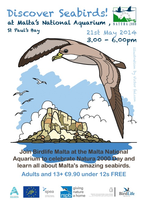 Discover seabirds! poster