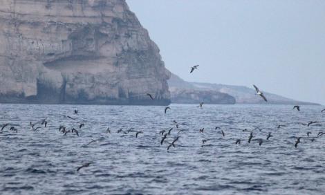 Ta ' Cenc cliffs, photo by Aron Tanti