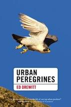 Urban Peregrines by Ed Drewitt